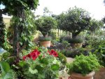 bunny-guinness-garden-of-many-pots