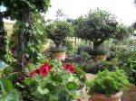 bunny-guinness-garden-of-many-pots